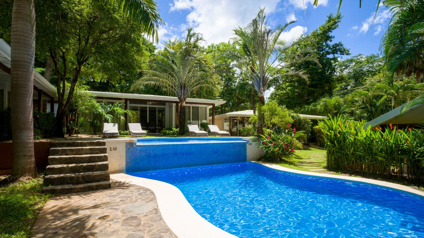 5881-Le jardin tropical luxuriant